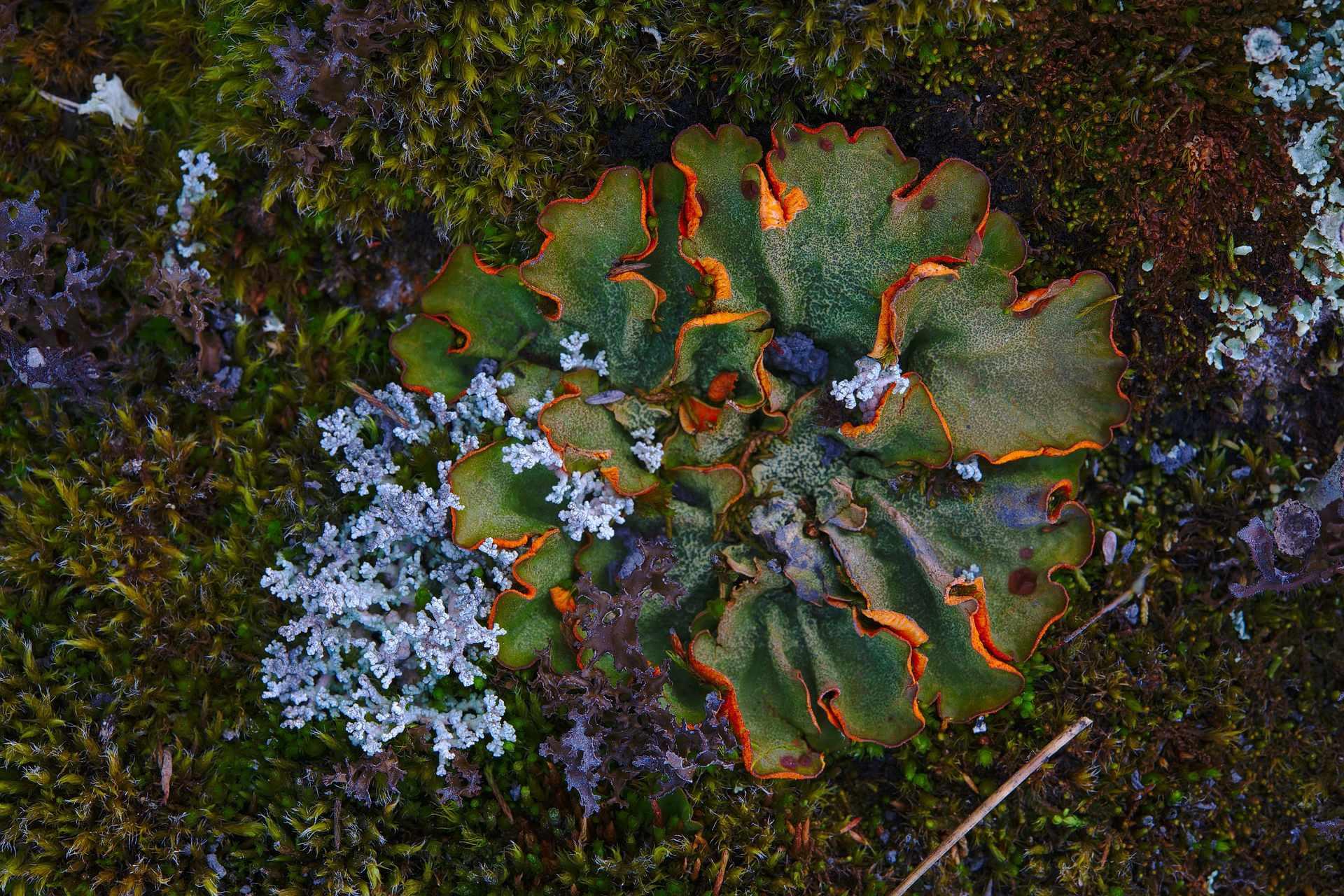 Close up of pretty moss and lichen