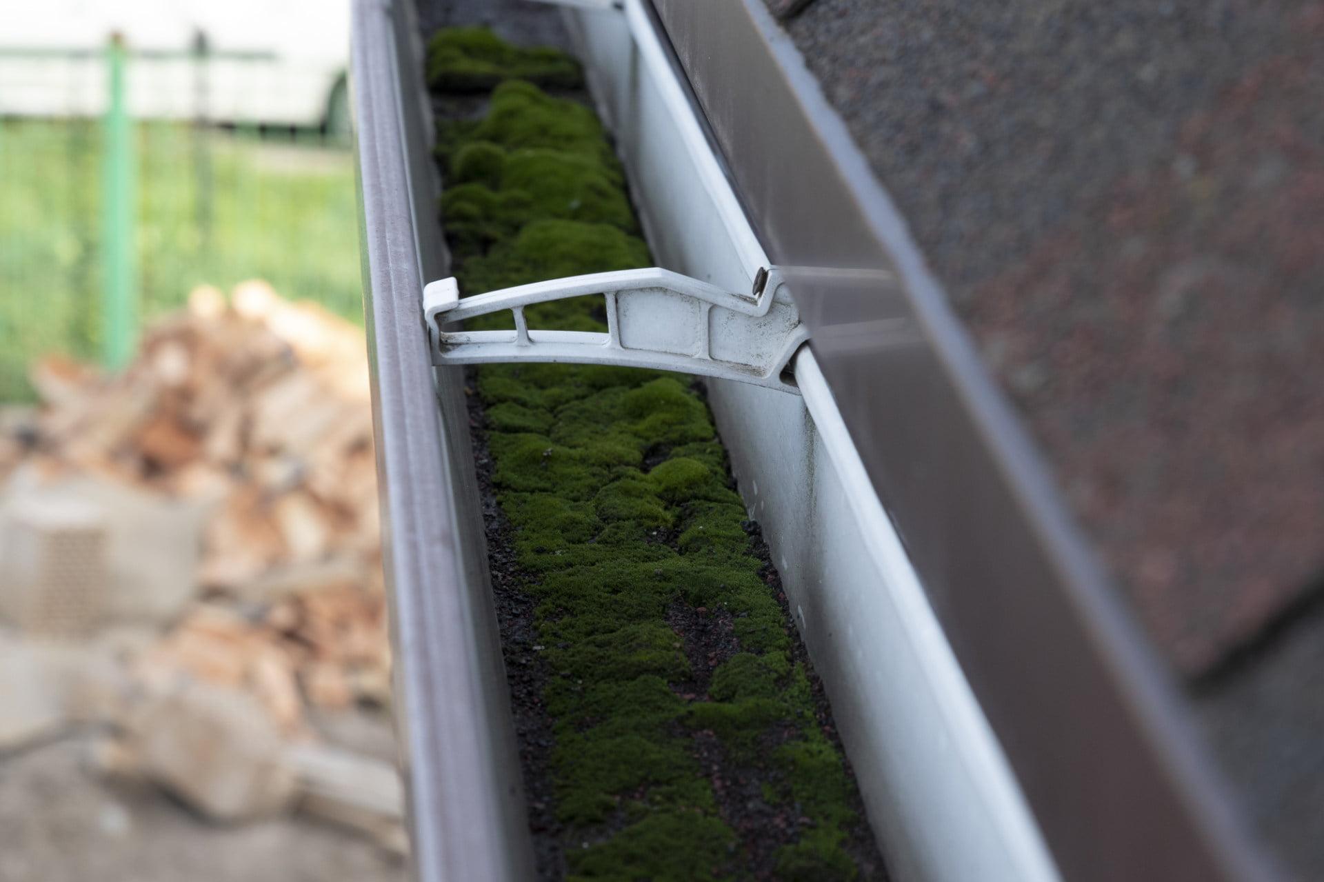 Moss growing inside a gutter